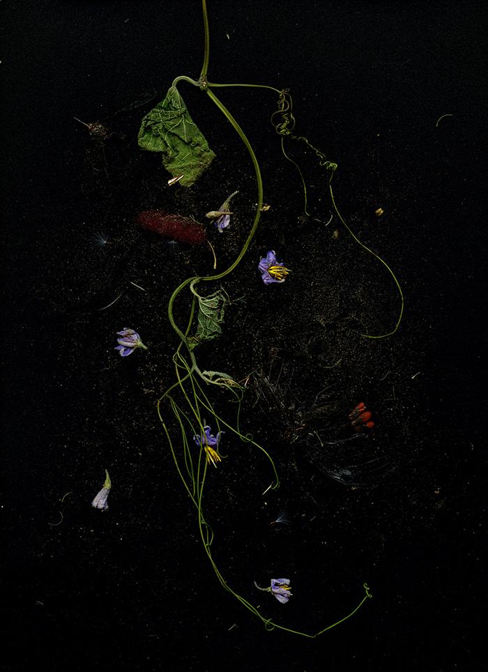 s-titulo-karla-melanias-escanografia-2016
