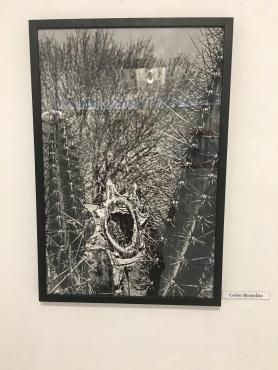 Aqui Acolá - Casa da Arte (15)
