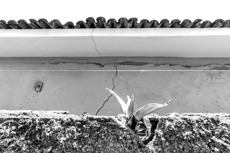 Blog Aqui Acolá - Percursos - Pinheiro - Arthur Celso 01 (10)