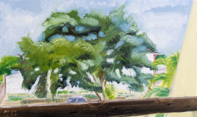 Árvore no Pinheiro. Nícolas Elifas - blog AQUI ACOLÁ - PROJETO PERCURSOS (14)