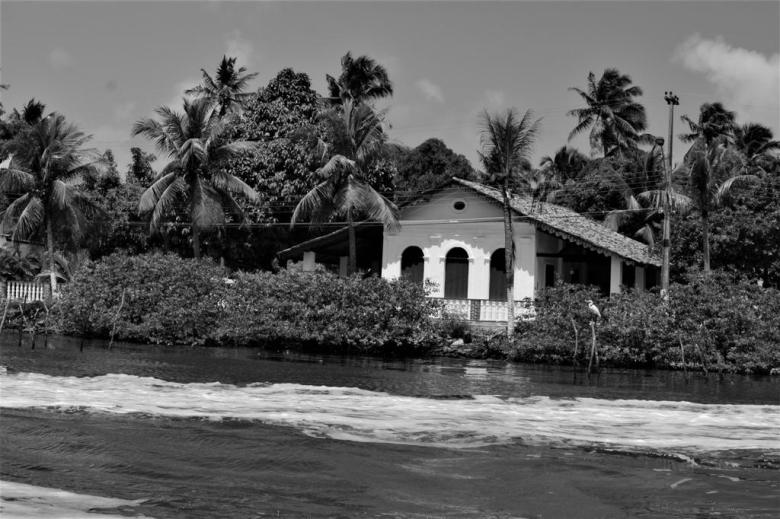 BLOG AQUI ACOLÁ - MÁRCIO VALENÇA. STITULO1. série Lagoa Mundau (11)