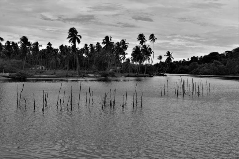 BLOG AQUI ACOLÁ - MÁRCIO VALENÇA. STITULO1. série Lagoa Mundau (3)